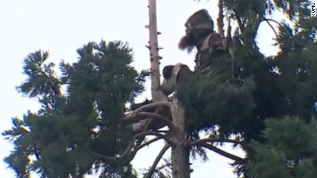 man tree seattle live stream moos pkg_00003909.jpg