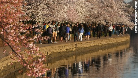 Blossom-peepers stroll along the Tidal Basin on March 24 in Washington.