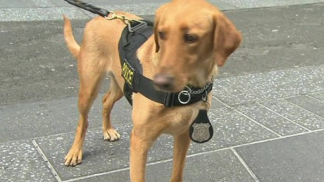 vapor dogs bomb detection kaye pkg ac360_00025814.jpg