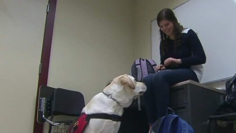 diabetic alert dog elle and coach poppy harlow pkg_00000212.jpg
