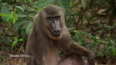 inside africa nigerian wildlife spc a_00075504.jpg