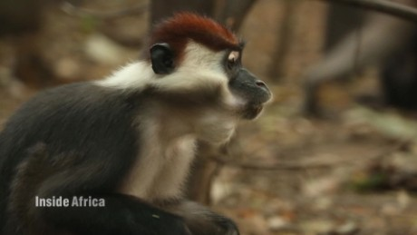 inside africa nigerian wildlife spc c_00005724.jpg