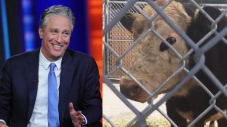 Jon Stewart rescues runaway bull orig vstop dlewis_00000000.jpg