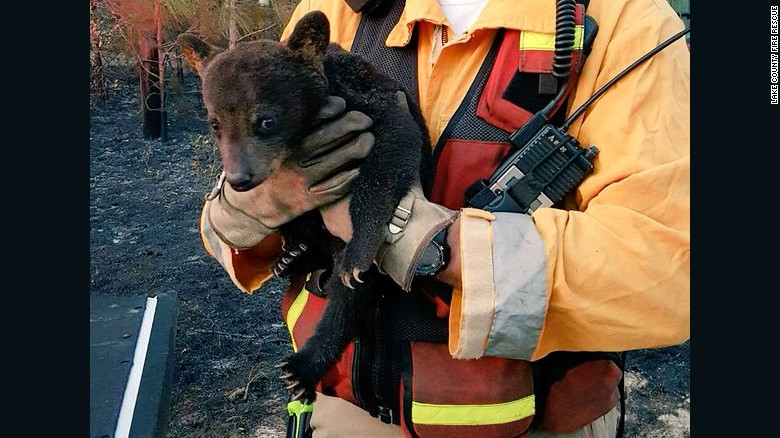 """""""Smokey Junior"""" was rescued with only minor injuries."""