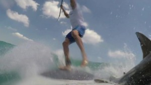 man knocked off paddle board by shark pkg_00001118.jpg
