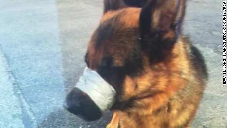 dog found with muzzle taped shut pkg_00001029
