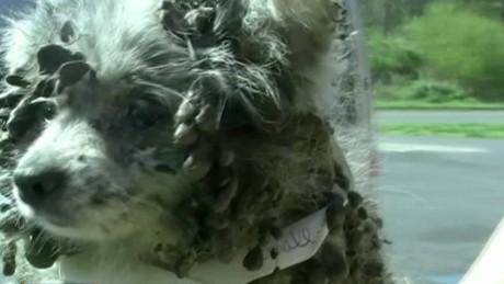 cnnee vo rec perros desalojados y maltratados _00000226
