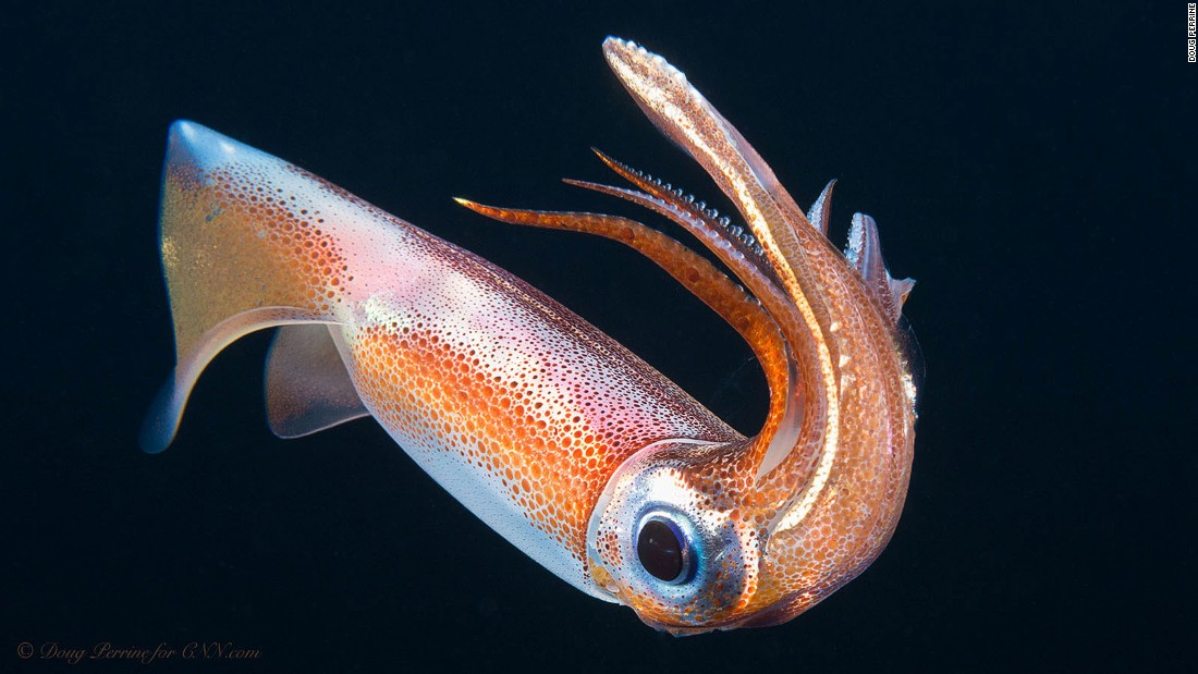 'Alien' fish and more mesmerizing creatures