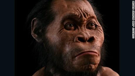 Reconstruction of Homo naledi by John Anthony Gurche.