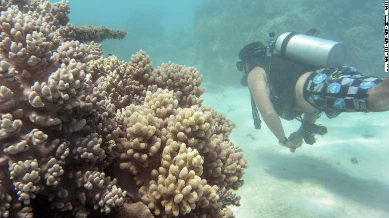 "Of the reefs surveyed in the northern third of the Reef, 81% are characterized as ""severely bleached."""