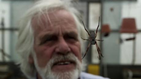 fritz vollrath spider silk jsten orig_00004316.jpg