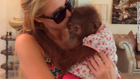 Paris Hilton poses with an orang-utan on her Instagram account.