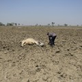 GettyImages-522830218India drought