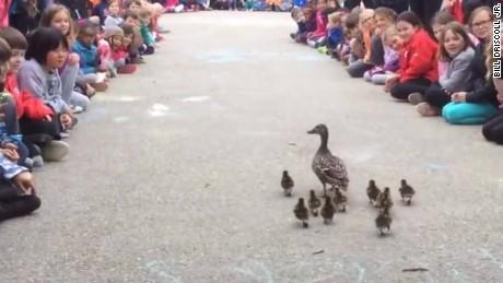 ducklings elementary school guide jnd orig vstan_00001024.jpg