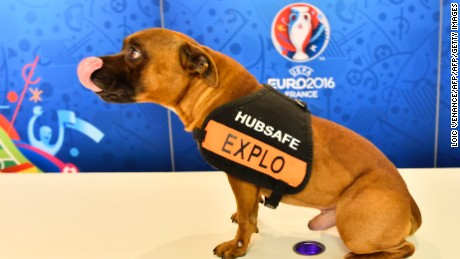 An explosive detection dog is pictured with the logo of the UEFA Euro 2016  in the lobby of the Palais des Congres in Paris on December 12, 2015, ahead of the draw for the Euro 2016 football championships finals. Paris hosts the draw for the Euro 2016 finals on December 12, with less than six months now to go before the start of the first 24-team tournament in the competition's history. The coaches of the competing nations will be in attendance in the French capital to find out who their sides will come up against in the group stage of the European Championship, which kicks off on June 10, and what their route to the final might be.   / AFP / LOIC VENANCE        (Photo credit should read LOIC VENANCE/AFP/Getty Images)