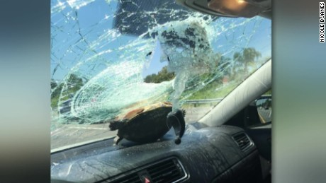 Turtles Cause More Car Crashes