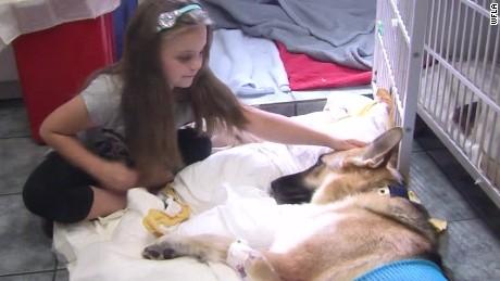 dog saves girl snake bite pkg_00005223.jpg