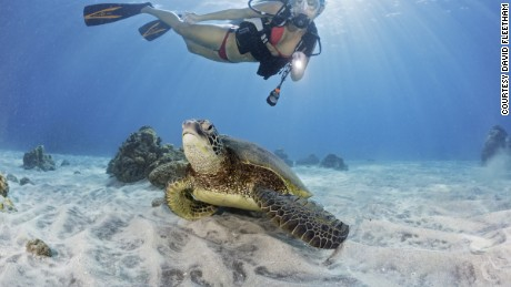 Green sea turtle, Chelonia mydas, resting on the sand bottom and a female diver (MR).  Hawaii.