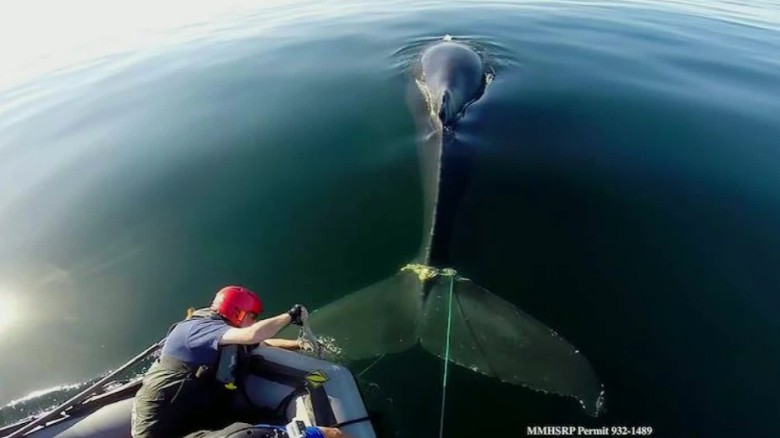 Whales get caught in fishing lines