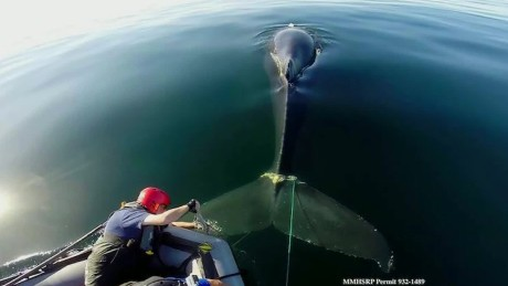 whale rescue pkg _00011509
