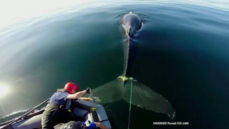 whale rescue pkg _00011509.jpg