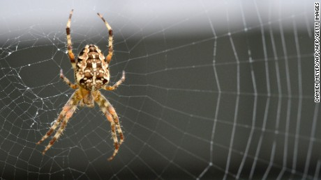 Harnessing spider powers to heal human bodies