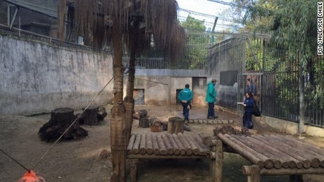 Two lions were shot and killed at the Santiago Metropolitan Zoo  after a man jumped into the cats' enclosure in an apparent suicide attempt.