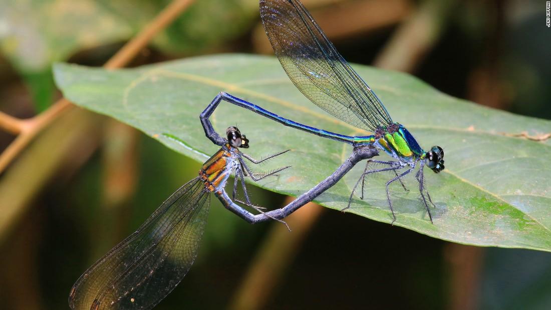 species new interdisciplinary essays
