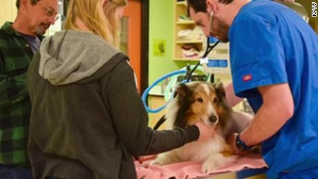 dog mystery illness tick pkg_00014730.jpg