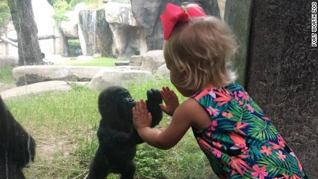 Baby gorilla, Gus and little girl named Braylee share cute moment at Fort Worth Zoo.