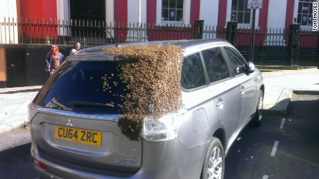 Thousands of bees swarm a car
