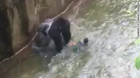 boy falls into gorilla habitat pkg nr_00010114.jpg