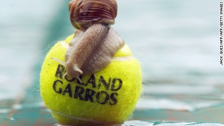 A snale enjoys rain on a Roland Garros tennis ball on the covered central court, 30 May 2000 at the French Open in Paris. Persistent morning rain delayed the start of play today, the second day of the French Open. AFP PHOTO JACK GUEZ (Photo credit should read JACK GUEZ/AFP/Getty Images)