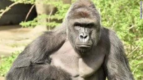 cincinnati zoo gorilla harambe death presser bts nr_00000325