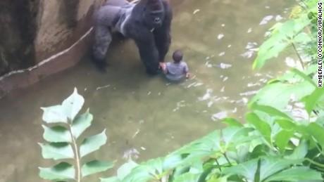 gorilla 911 call audio Cincinnati Zoo orig_00000000