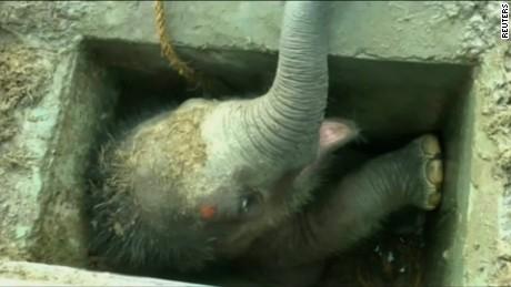 cnnee rec vo elefante pide ayuda a sus cuidadores para su cria_00002104