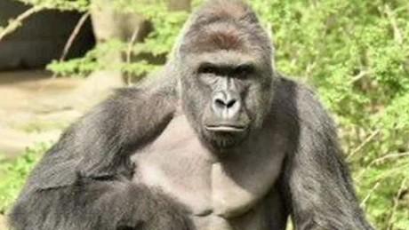 inside gorilla's mind marquez dnt ebof_00021702.jpg