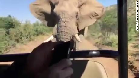 Elephant charges Arnold Schwarzenegger orig vstan jhurst_00005103