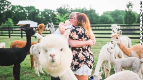 cnnee vo rec animales la alpaca mercedes propuestas de matrimonio _00004517