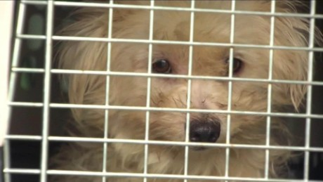 276 dogs rescued news 12 new jersey dnt_00011816.jpg