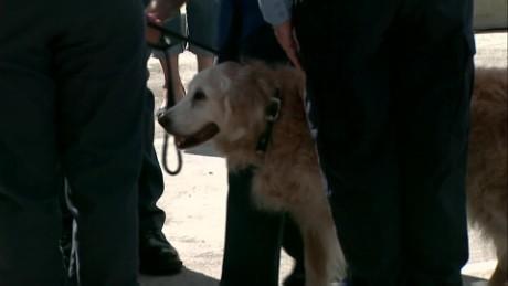 last known 911 dog dies vo sot_00000210