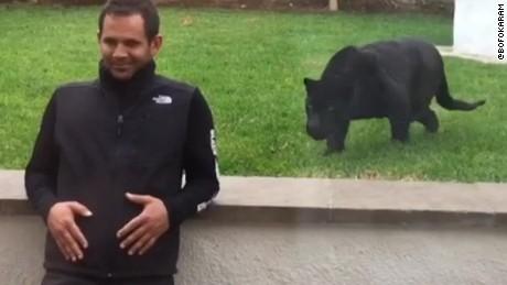 sneaky panther moos pkg _00001004.jpg