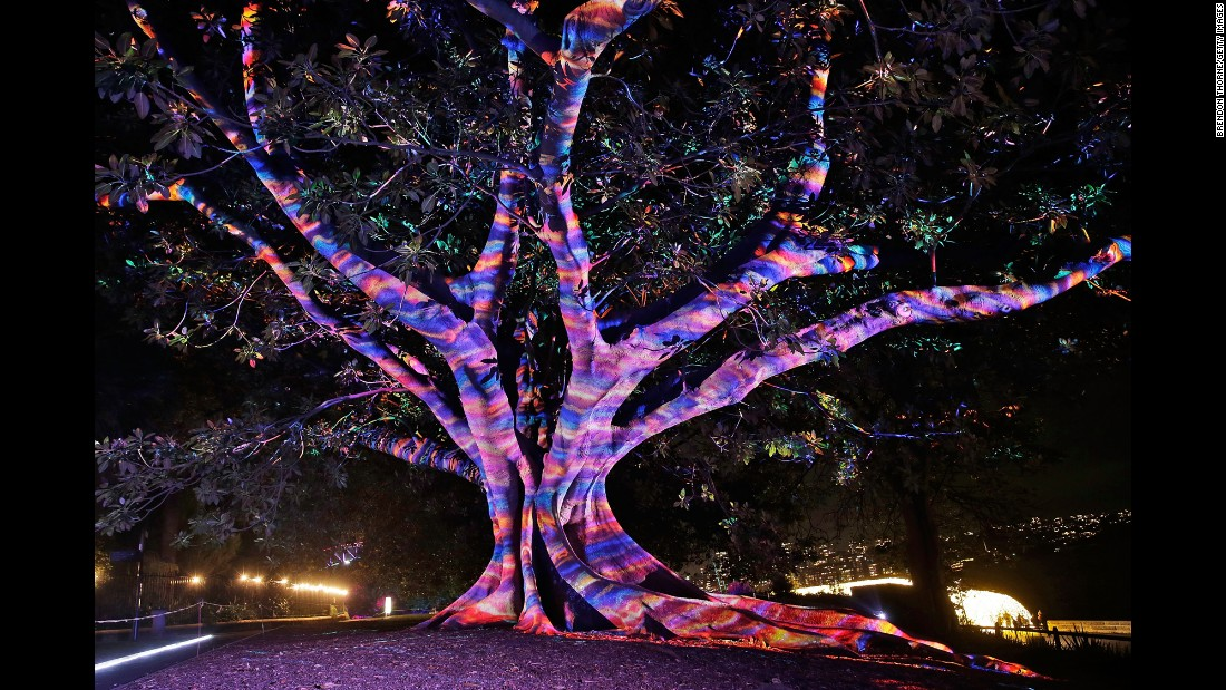 A tree is lit up during the