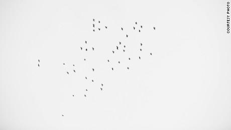 49 birds flew over a vigil in Orlando on June 13.
