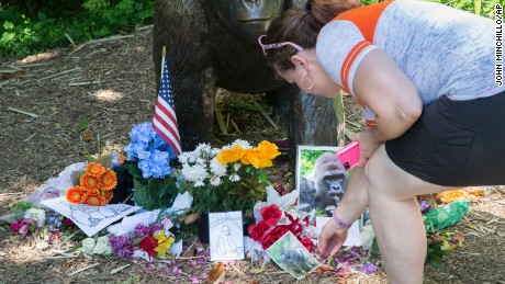 A visitor touches a picture of Harambe at a makeshift memorial outside the Gorilla World exhibit at the Cincinnati Zoo & Botanical Garden, on Tuesday, June 7.