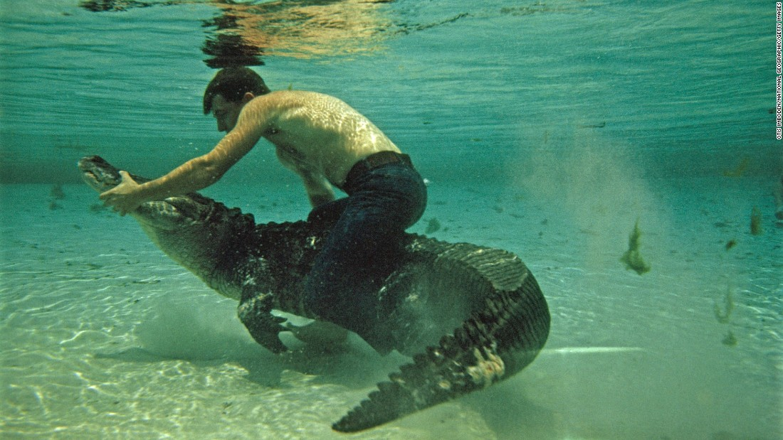 A man wrestles an alligator underwater at the Reptile Institute in Silver Springs, Florida.