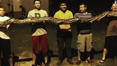14-foot long python found in yard_00000415