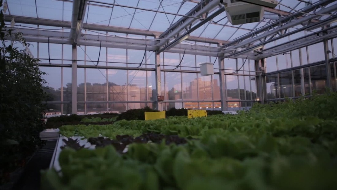 Urban Farmers' rooftop farms