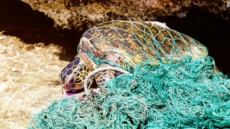 Sea turtle tangled in plastic fishing gear.