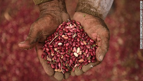 A peasant shows a handful of beans of the CENTA-EAC variety at a farm in Quezaltepeque, about 30 km north of San Salvador on November 6, 2015. CENTA-EAC velvet bean seed --a non-transgenic, simple crossing of black and red beans-- was developed by the Centre of Agricultural Technology (CENTA) and endures the inclemency of weather and resists typical plagues.    AFP PHOTO / MARVIN RECINOS / AFP / Marvin RECINOS        (Photo credit should read MARVIN RECINOS/AFP/Getty Images)